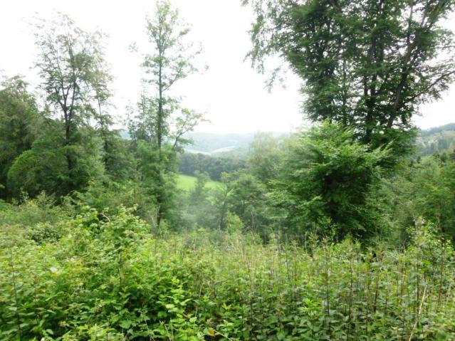 Fast unendlicher Urwald: Auf Wanderschaft in einem Teil der Elfringhauser Schweiz. Foto: Lars Friedrich