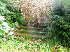 """Der Tannenplatz im Norden des Gartens hatte früher den Namen """"grünes Zimmer"""" - heute schimmern unter umgestürzten Bäumen noch die Treppen zur Tannenallee durch. Foto: LRF"""