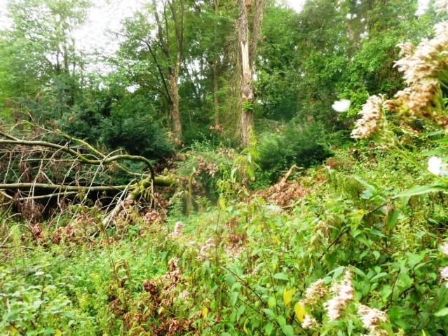 Früher war hier ein Trimm dich-Platz, heute ein Urwald. Foto: Lars Friedrich