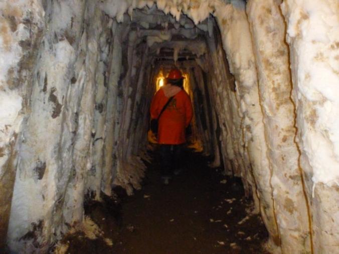 Beeindruckend: ein unterirdischer Schimmel-Tunnel. Foto: Lars Friedrich