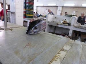 In der Fischmarkthalle von Zadar. Foto: Lars Friedrich