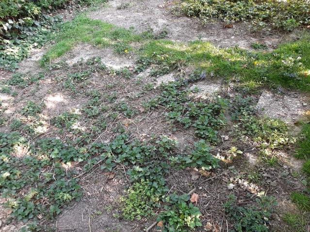 Ungepflegte Grabstätte statt ehrendes Andenken: die Gräber ausländischer Arbeiter auf dem Kommunalfriedhof in Welper. Foto: LRF/HAT